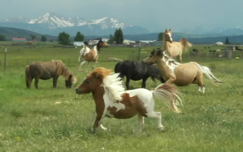Hilliard Horses To Hug